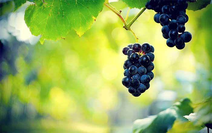 dieta winogronowa