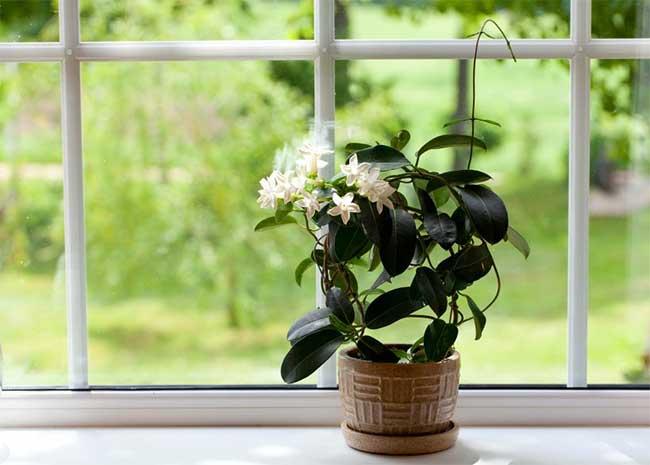 Najlepsze Rośliny Do Sypialni Cz 1