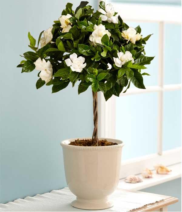 Najlepsze Rośliny Do Sypialni Cz 4