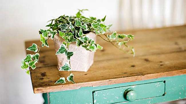 Najlepsze Rośliny Do Sypialni Cz 6