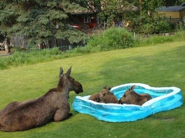 zwierzeta w basenie0